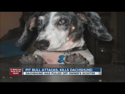 Pit bull attacks woman's scooter, kills her dog