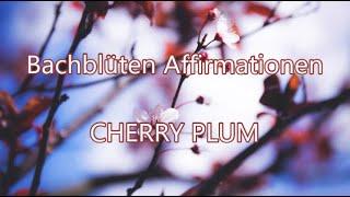 🌻CHERRY PLUM-Die Blüte der Gelassenheit und des Loslassens🌺Für mehr Flow✔️Bachblüten Affirmationen