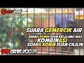Masteran Konin Belalang Emas Kombinasi Cililin Therapy Gemercik Air  Mp3 - Mp4 Download