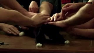 GIFS WITH SOUND | CATS ONLY | FUNNY ANIMAL VIDEOS VIDEOS 2014