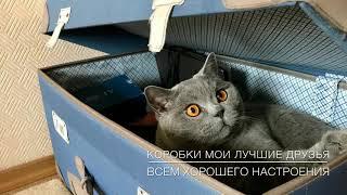 ТРЮК КОТА! Смешной британский кот ГАРРИ/ British Cat