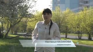 В Перми появится первая площадка для выгула собак
