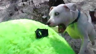 Rescue Dog Gets The Biggest Surprise Of His Life And Has A Response That's Pure Gold