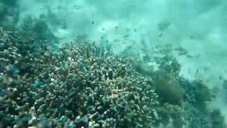この動画は、宮古島の新城ビーチで子連れでシュノーケルをした動画です...