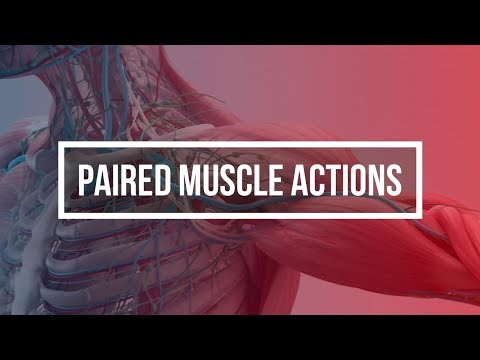PAIRED MUSCLE ACTIONS