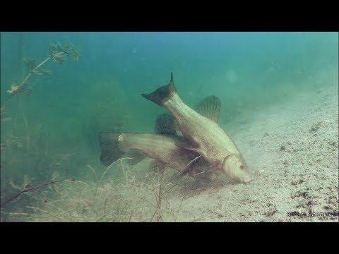 Вопрос: Почему рыба клюёт на червя?
