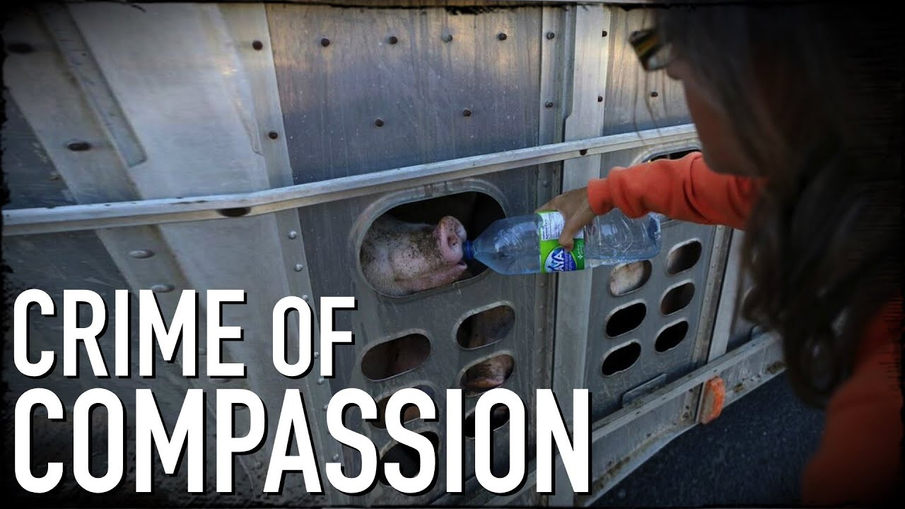 crime of compassion