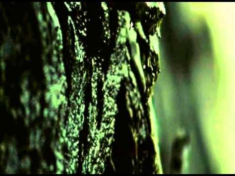 Обзор фильма Волчья яма