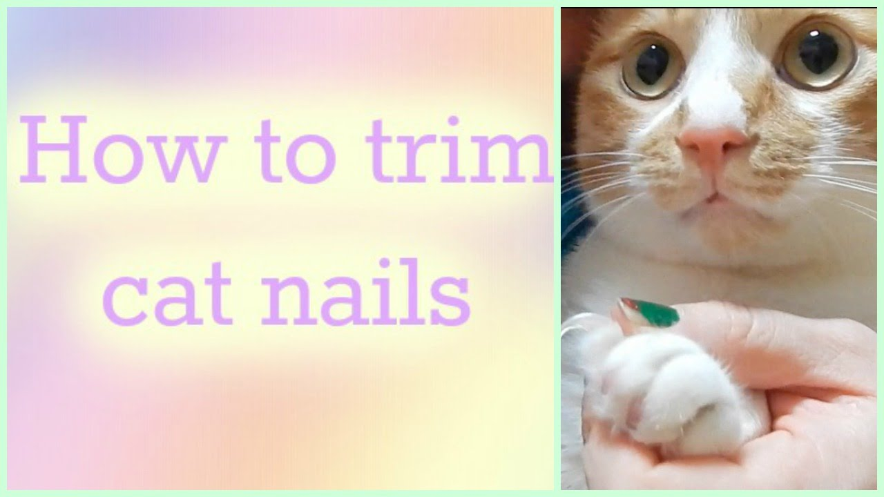How to trim cat nails Anyone can do it