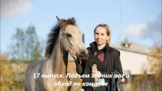 Обучение Дарчи.17 выпуск. Как научить коня поднимать задние ноги и обходить человека по команде.