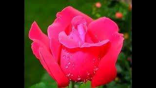 Божественный нектар для исцеления от всех недугов  и омоложения организма человека!!!