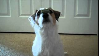 Best Classic Dog Trick Nylabone Treat Flip New