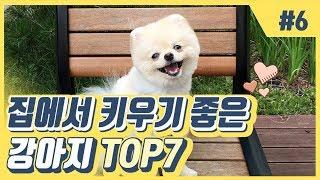 집에서 키우기 좋은 강아지 top7