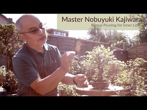 Bonsai Masterclass: Summer Bonsai Pruning for Inner Growth ramification - Master Nobu Kajiwara #174