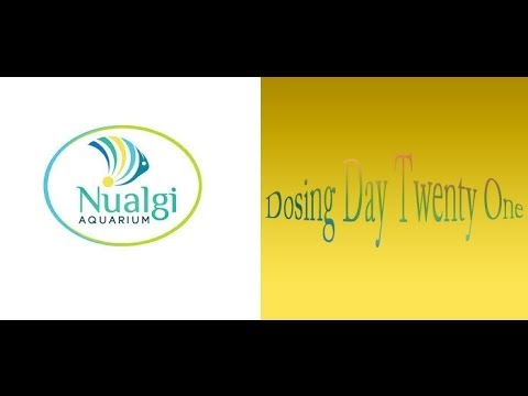 Nualgi Dosing Day 21 Trial ~ Amber's Aquariums