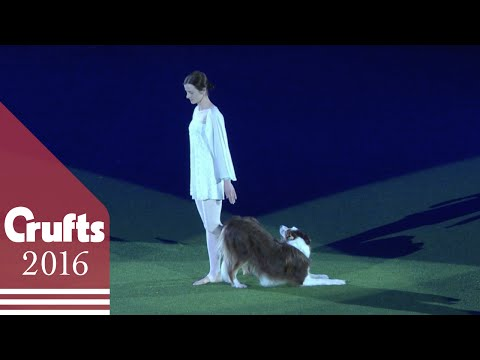 Swan Lake Routine Wins Heelwork to Music Competition | Crufts 2016
