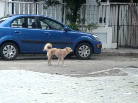 dog peeing on truck jpg 853x1280