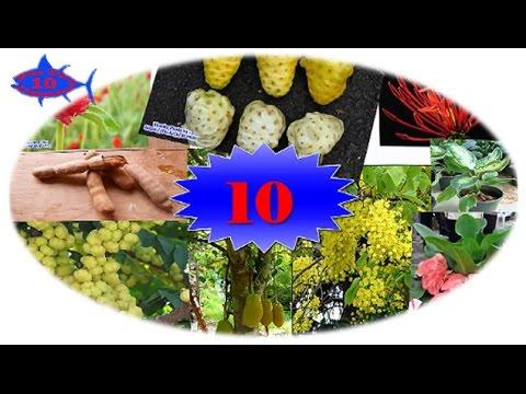 10อันดับต้นไม้มหามงคลที่ควรปลูกของคนไทย