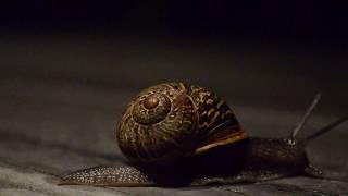 A Spookey OcToBeR Snaile Dude [OC {Pls don ot steel]}