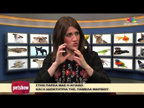 """Pet Show"" - 12.4.2017 - Akita Inu - Web Exclusive!"
