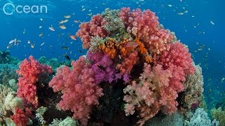 Diving The World's Richest Reefs   Raja Ampat, Indonesia