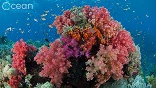 The World's Richest Reefs