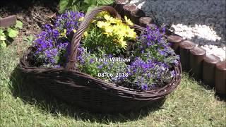 GARDEN (22) - Kwiaty w wiklinowych koszach - Wiatrak w ogrodzie