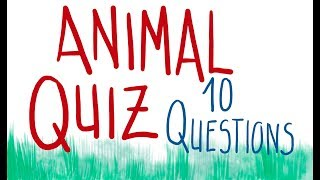 Animal QUIZ (10 questions) | Draw my life