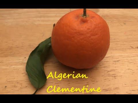 unterschied zwischen orangen und apfelsinen