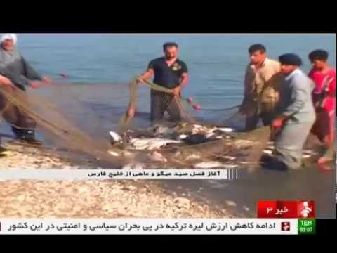 Iran Khuzestan province, Persian Gulf Fishing season فصل ماهيگيري استان خوزستان خليج فارس ايران