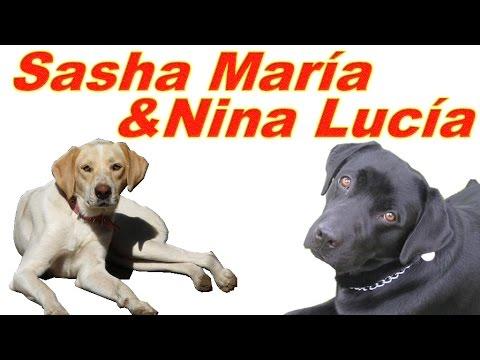 Sasha María y Nina Lucía - Dos perritas adoptadas | Tu Mascota TV