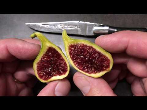 french fig farm: Coll de Dama Rimada