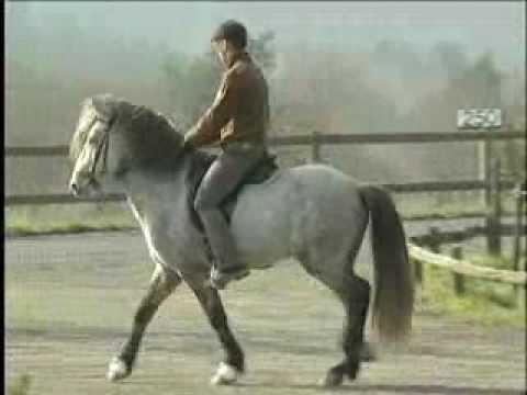 Aegidienberg Horse