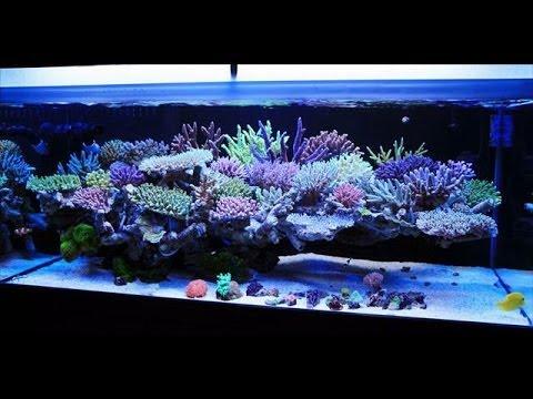 120 glns saltwater setup - YouTube