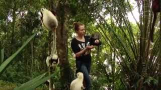 Trip to Madagascar in full HD, Lemurs, Baobab Valley, Chameleons and more