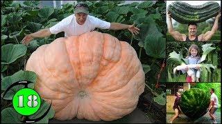 18 ผลไม้และผักยักษ์ที่คุณไม่อยากจะเชื่อ / 18 Giant Fruits and Vegetables You Won't Believe