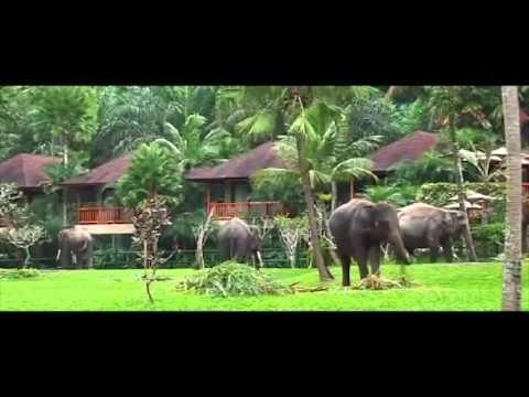 wisata-gajah-di-desa-taro,-kecamatan-tegallalang-kabupaten-gianyar