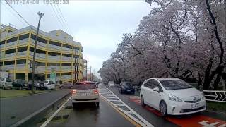 五条川のさくらをドライブ 愛知県丹羽郡大口町 おおぐちょう