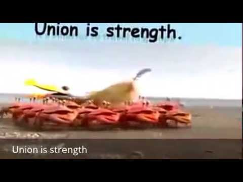 union is strength in tamil General and census commissioner, india in the union ministry of home affairs   commissioner, india who has been a tower of strength and inspiration to.