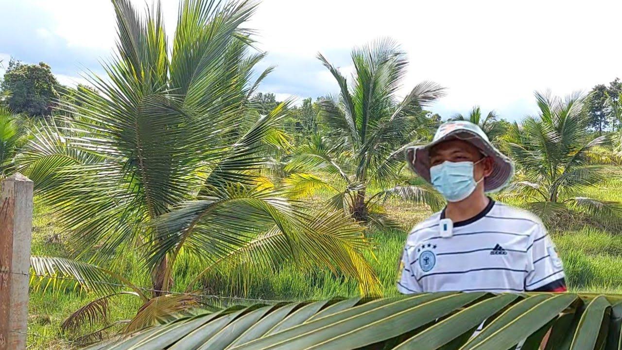 เกษตรผลงาน 3ปี ของคนไม่มีเวลาอยู่บ้านทำสวน ปลูกทิ้งไว้แล้วไปทำงาน!!