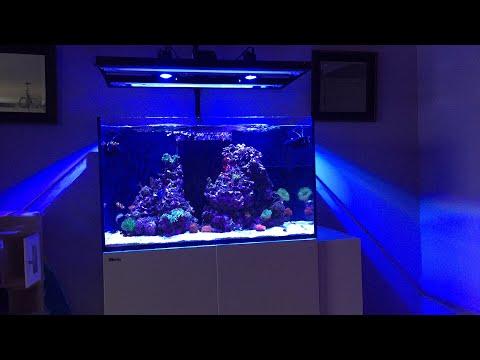 Red Sea Reefer 250 | PH Holiday Swings | HIGH Phosphates