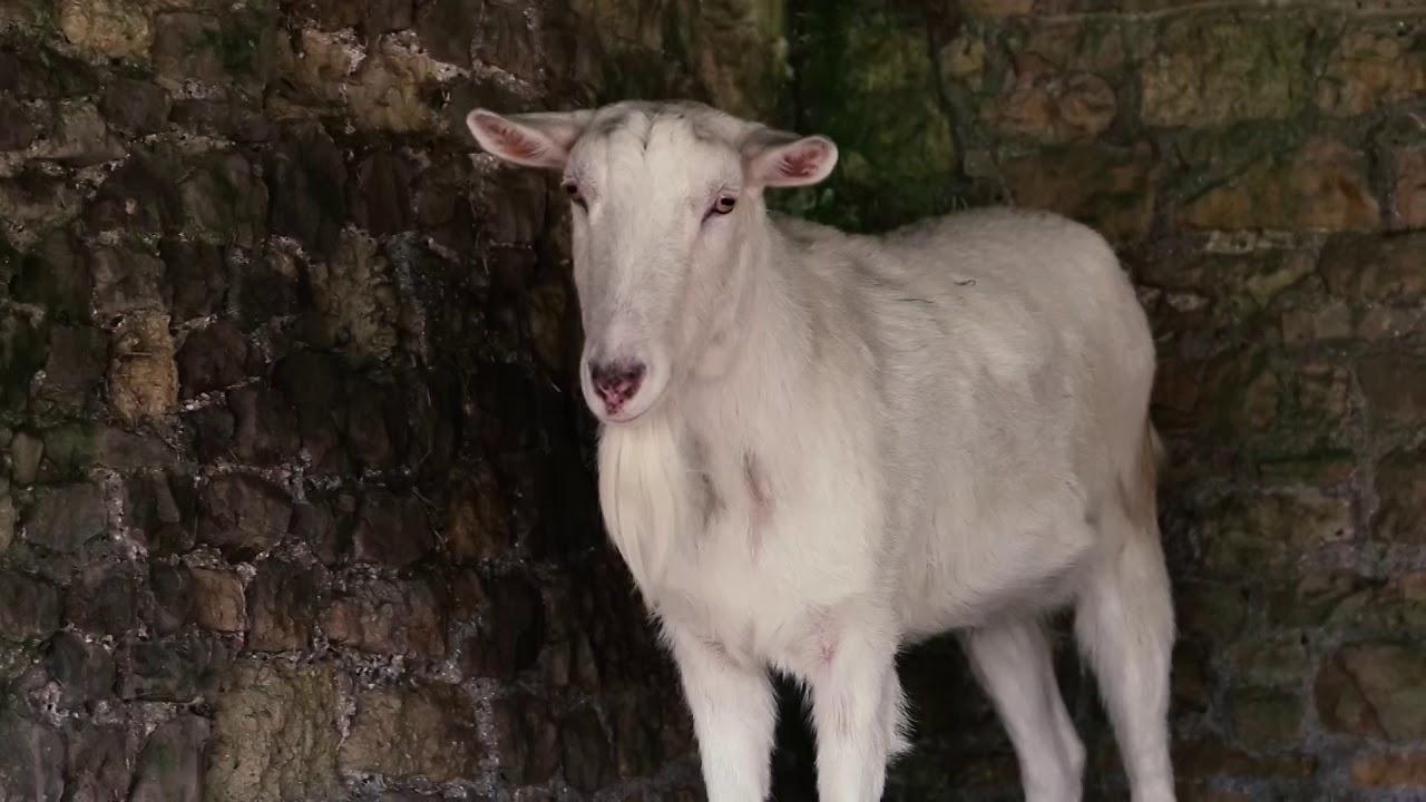 Adventure Park | Farm Animals | Café | Old Down Country Park