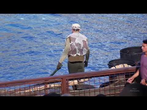 An incredible incident happened! WaterWorld stunt show at Universal Studios Hollywood