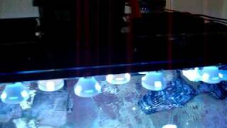 Coustom Cree Uv Diy Led Light Fixture How To Coral Reef