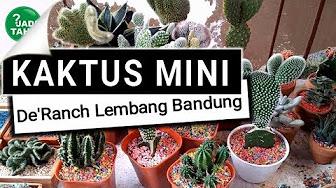 Popular Videos De Ranch Succulent Plant Youtube