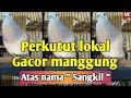 Perkutut Lokal Gacor Manggung Lama Atas Nama Sangkil  Mp3 - Mp4 Download