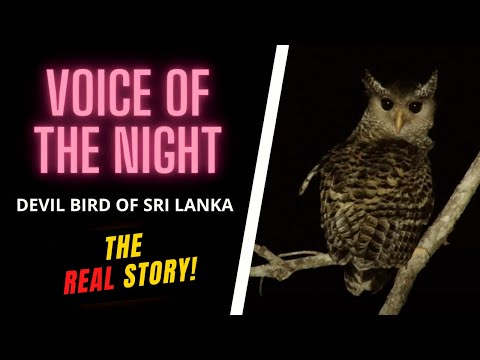 Voice Of The Night: The Devil Bird Of Sri Lanka (2017)