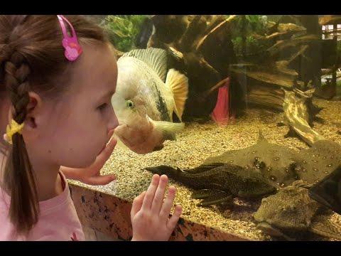 Аквариумные рыбки хищники большие и маленькие смотрим выставку || aquarium fish