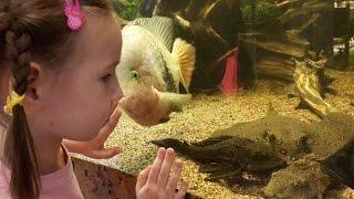 Аквариумные рыбки хищники большие и маленькие смотрим выставку || aquarium fish(Аквариумные рыбки (aquarium fish) хищники большие и маленькие представлены, на выставке которую мы с Юлей решили..., 2015-06-28T06:27:01.000Z)