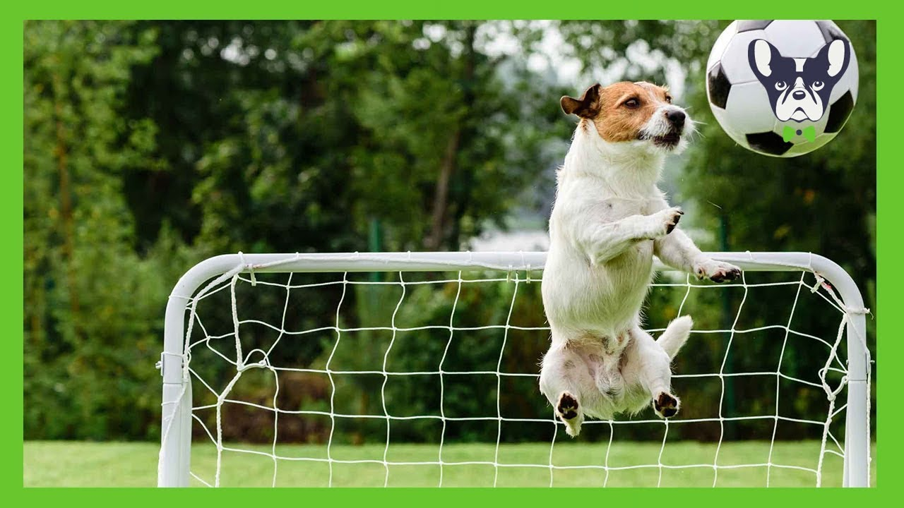 Funny Dogs Playing Soccer Compilation ⚽ - YouTube